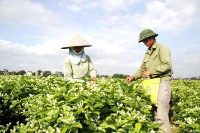 Những nghề làm giàu ở nông thôn hiện nay