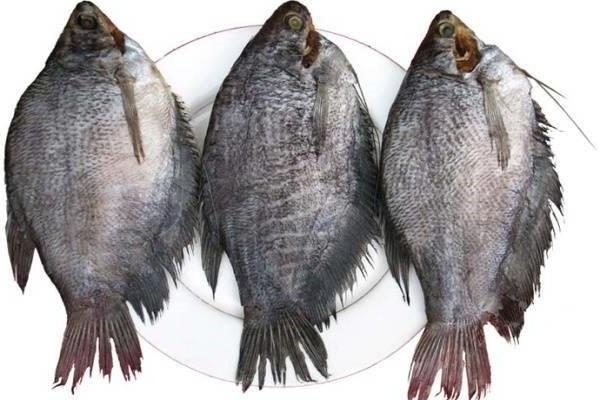Cá khô