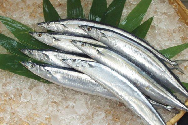 Chọn cá thu Nhật