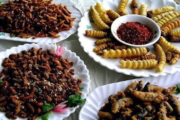 món ăn từ côn trùng
