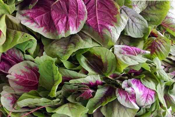 rau dền là loại rau phổ biến