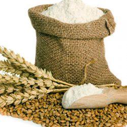 bột mì là gì