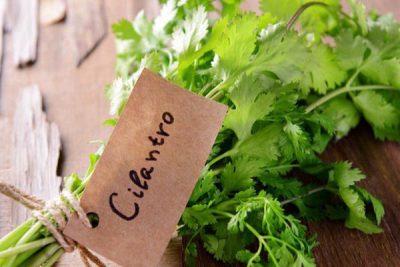 hình ảnh cho cilantro là gì
