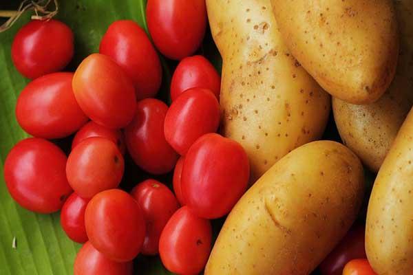 cà chua kết hợp với khoai tây