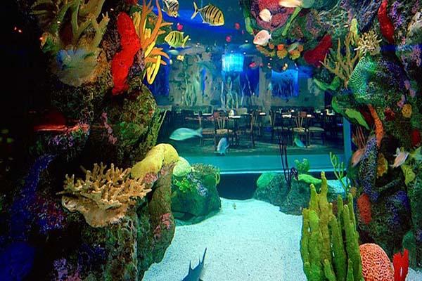 Nhà hàng Aquarium