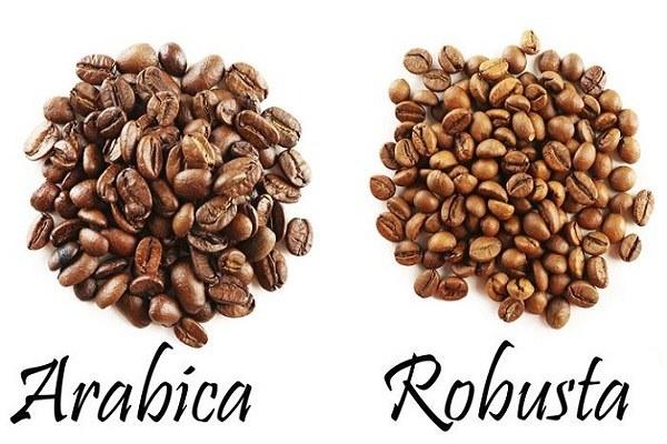 hình ảnh cà phê arbica