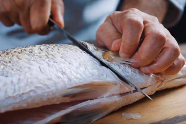 hình ảnh cắt mang tai của cá chẽm